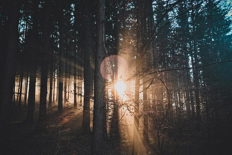 bois foret ecologique
